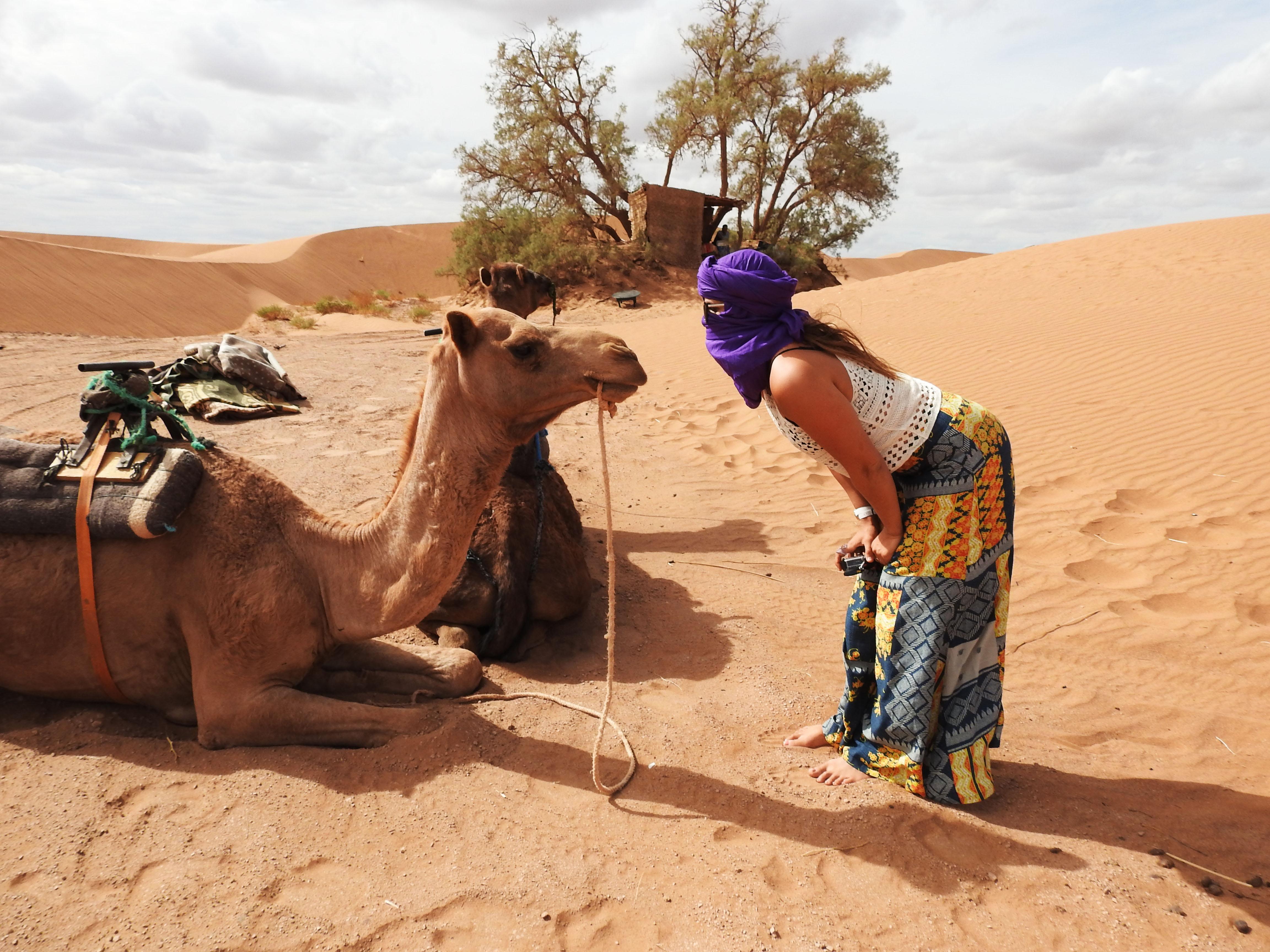 Kissin Camels
