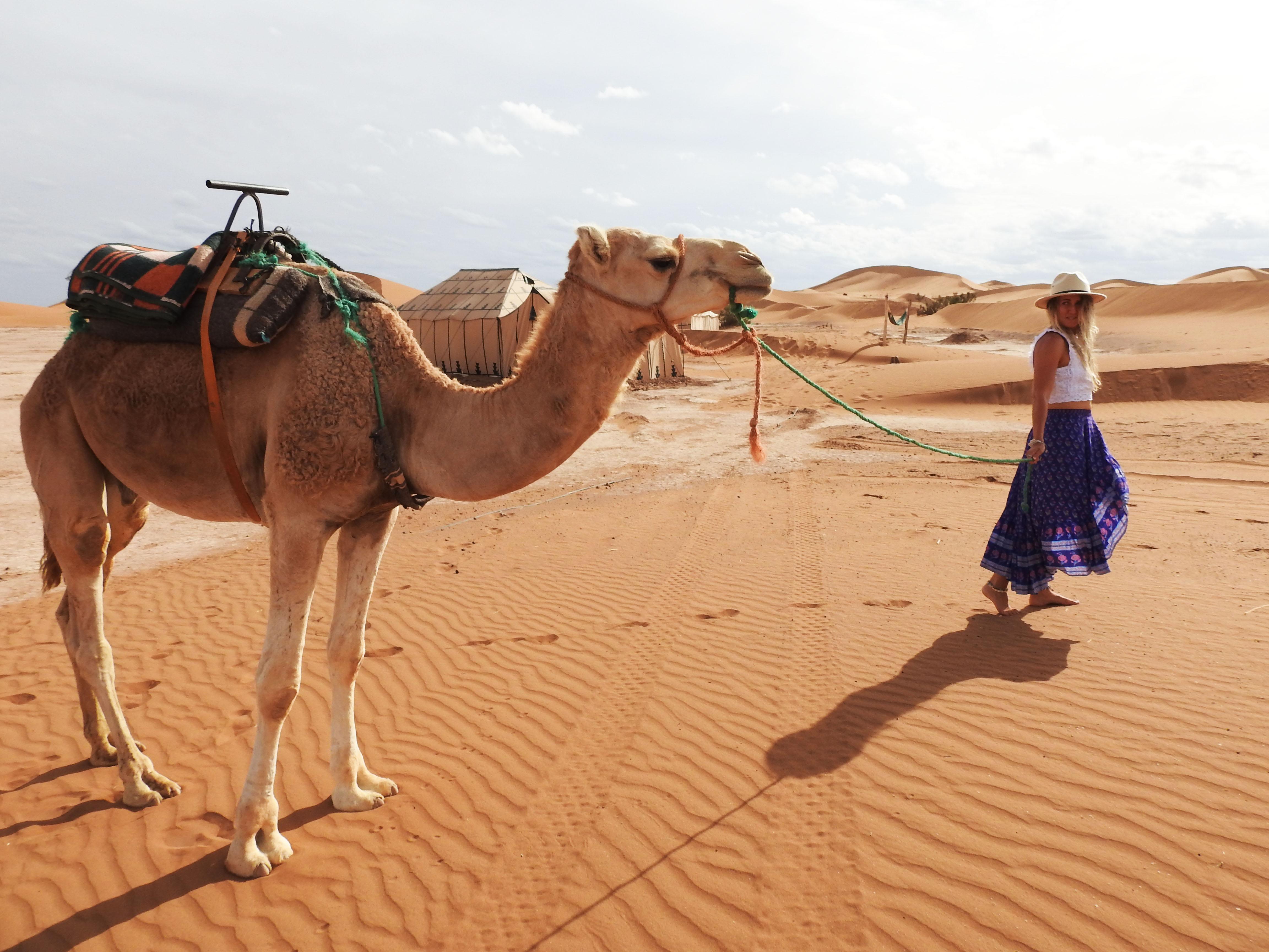 Cutest Camel
