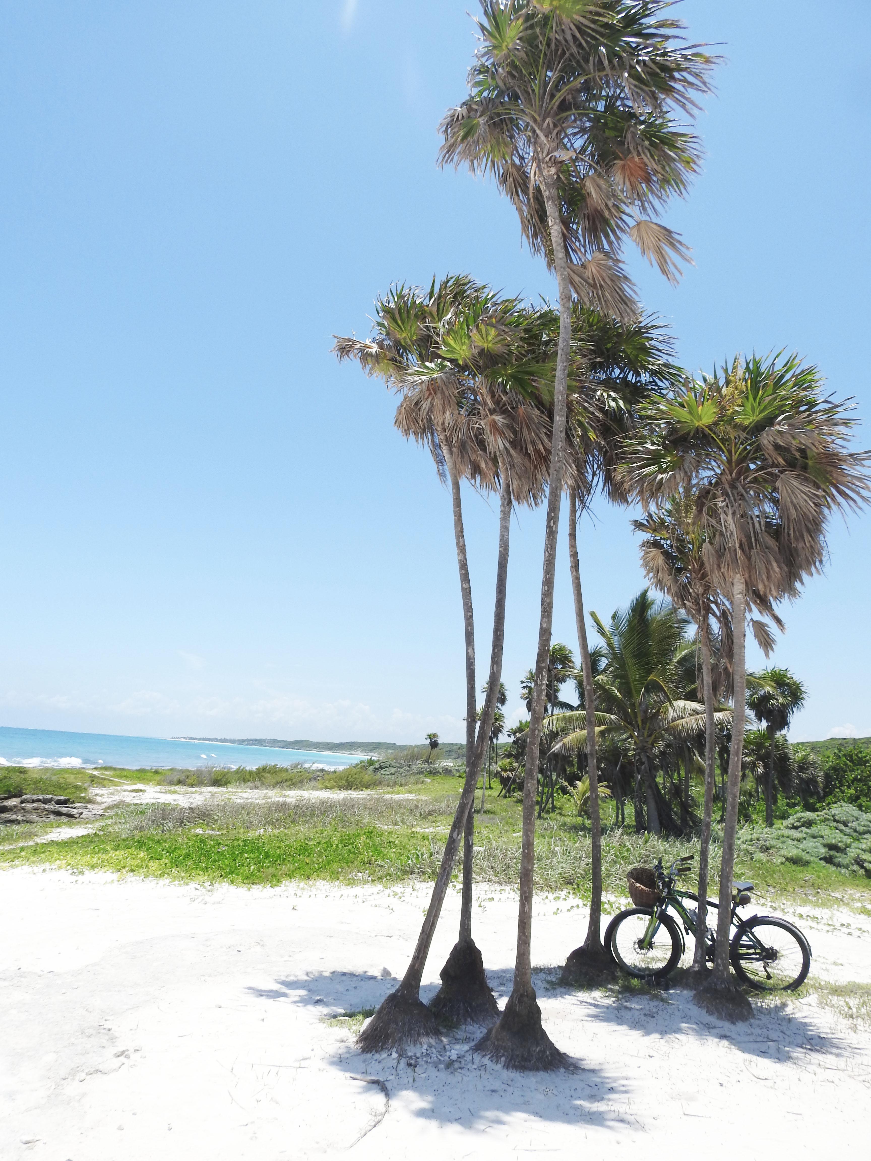 Beach cenote